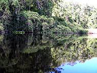Marimbus Humedal, Chapada Diamantina, Bahía, Brasil. Author and Copyright: Marco Ramerini