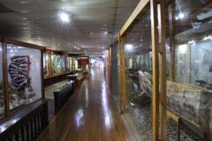 Museo Maggiorino Borgatello, Punta Arenas, Chile. Autor y Copyright Marco Ramerini