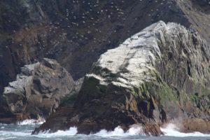 Aves marinas, Cabo de Hornos, Chile. Autor y Copyright Marco Ramerini