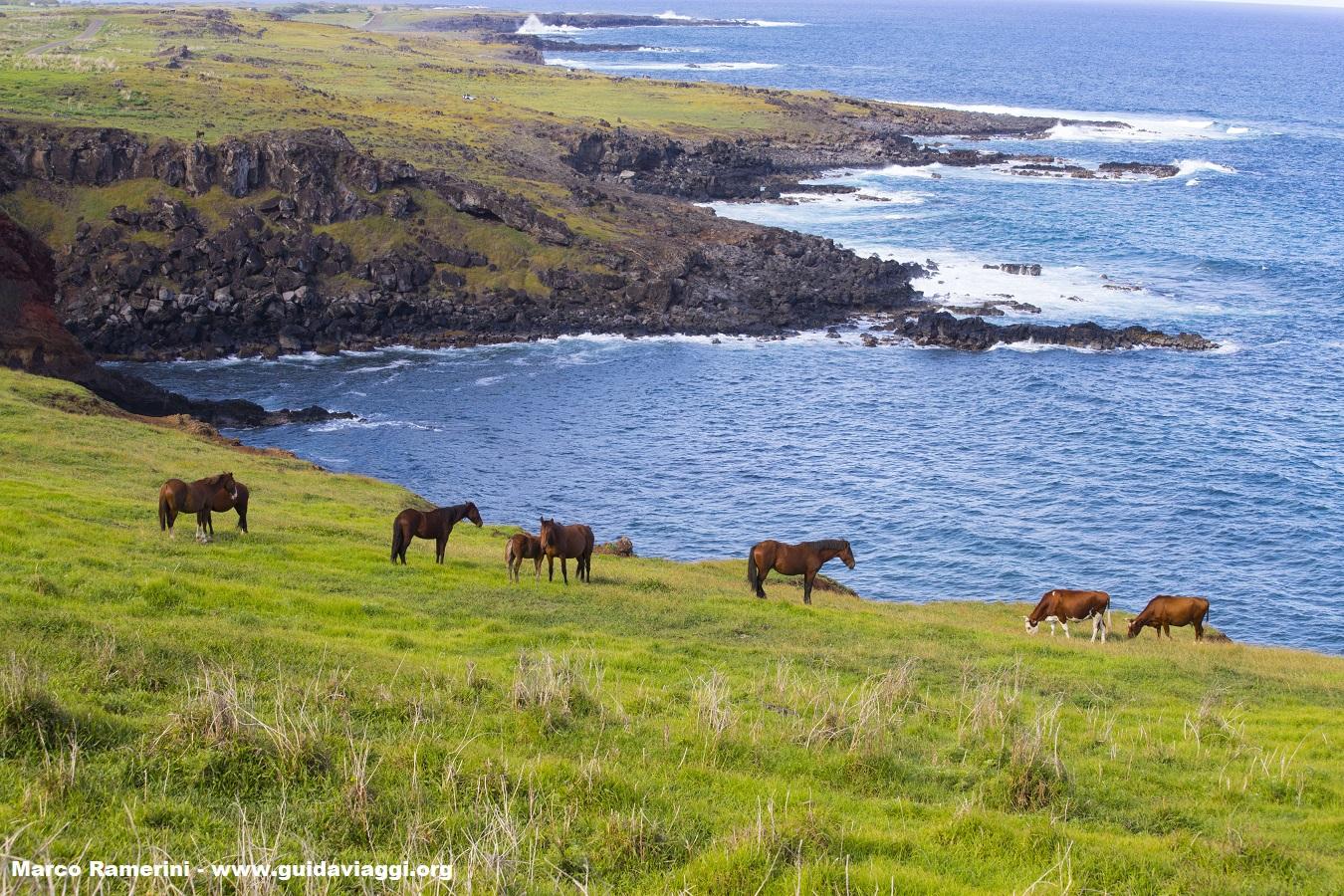 Caballos, Isla de Pascua, Chile. Autor y Copyright Marco Ramerini
