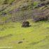 Cráter del Rano Raraku, Isla de Pascua, Chile. Autor y Copyright Marco Ramerini