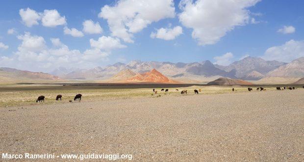 Animales pastando después de la frontera entre Kirguistán y China. Autor y Copyright Marco Ramerini