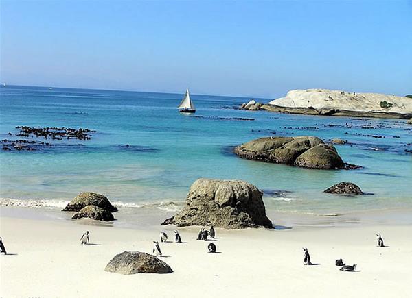 Pingüinos en Foxy Beach, Boulders Beach, Ciudad del Cabo, Sudáfrica. Autor y Copyright Marco Ramerini
