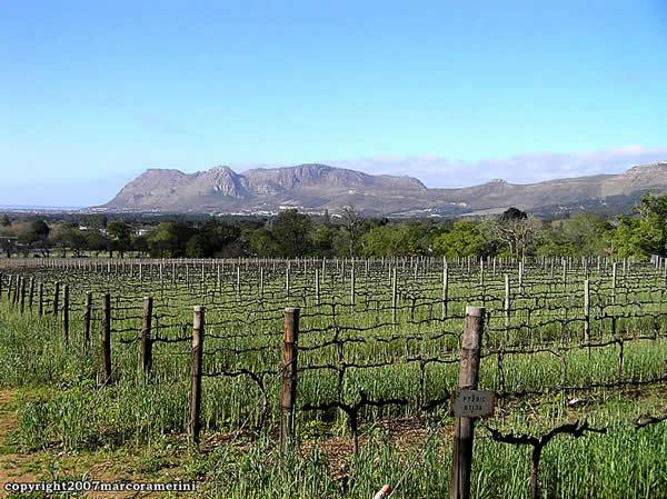 Viñedos Groot Constantia, Ciudad del Cabo, Sudáfrica. Autor y Copyright Marco Ramerini