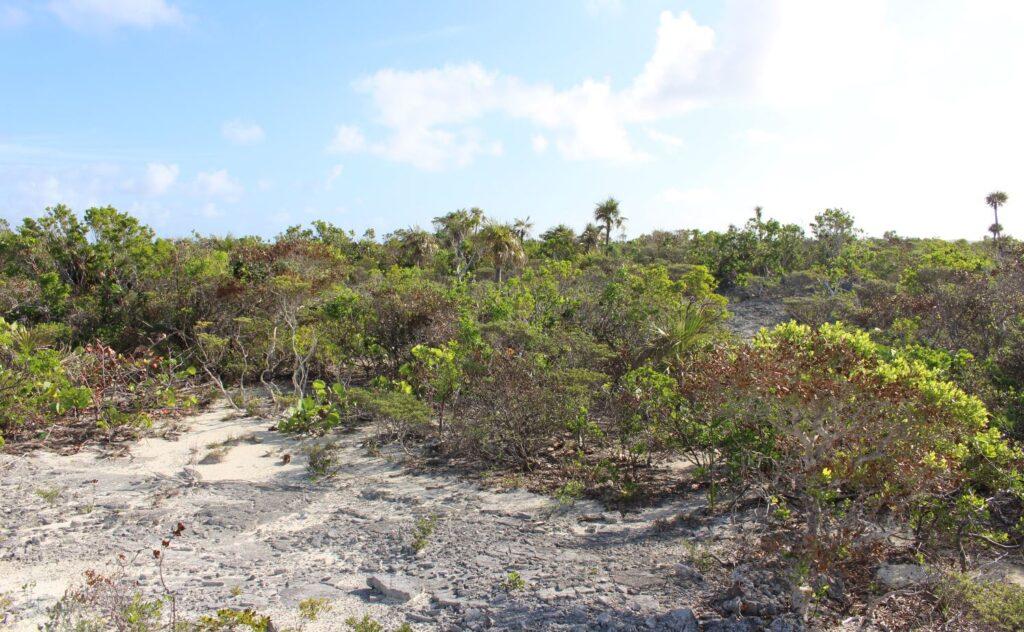La vegetación del interior de la isla, Long Island, Bahamas. Autor y copyright Marco Ramerini