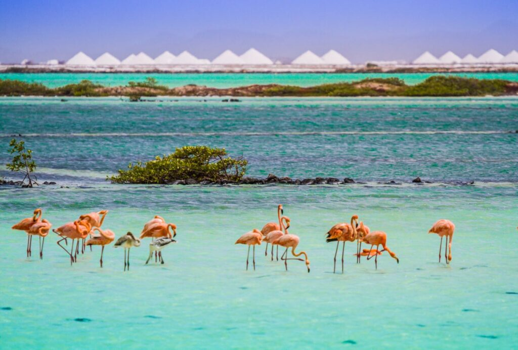 Flamencos, Bonaire. Photo Credit Bonaire Tourism